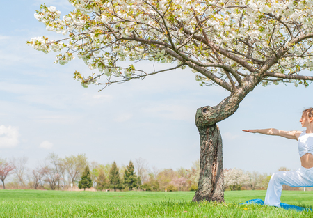 Beautiful woman is practicing yoga, doing Virabhadrasana exercise, standing in Warrior pose near blossom tree at the park. 版權商用圖片