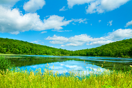 Summer Landscape lake and blue sky. Beautiful wild nature, forest. Lake with mirror reflections on sunny day. 版權商用圖片