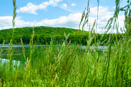 Landscape lake. Green grass on summer sky background. Beautiful wild nature