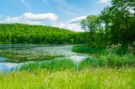 Landscape lake. Beautiful wild nature, forest. Lake with mirror reflections on sunny day. Summer lake