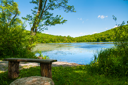Beautiful landscape lake. Forest lake and empty bench. Old bench on lake background