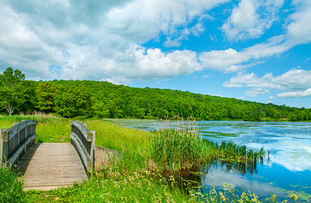 Summer Landscape lake and blue sky. Beautiful wild nature, forest. Lake with small wooden bridge. 版權商用圖片