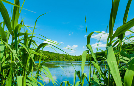 Summer Landscape lake and blue sky. Beautiful wild nature. Lake with mirror reflections on sunny day.