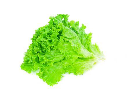 Lettuce. Salad leaf. Fresh green lettuce leaves on white background Reklamní fotografie