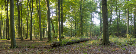 Sun-flooded deciduous forest in late summer