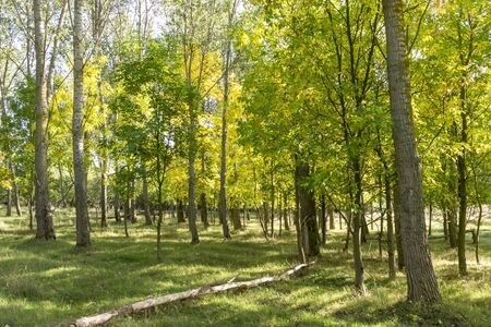 late summer: Sun-flooded deciduous forest in late summer