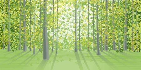 dense: Summer landscape in the dense forest