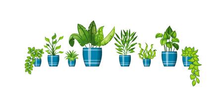 flowerpots: Set of different plants in flowerpot