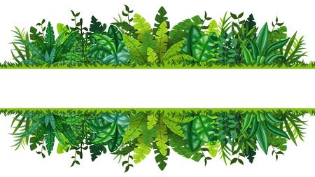 Illustration of a tropical rainforest banner  イラスト・ベクター素材