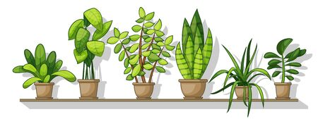 Illustration of different house plants on a shelf, panorama