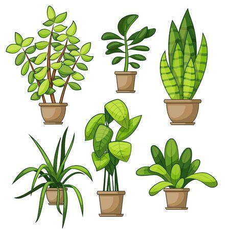 Set of different house plants Illustration