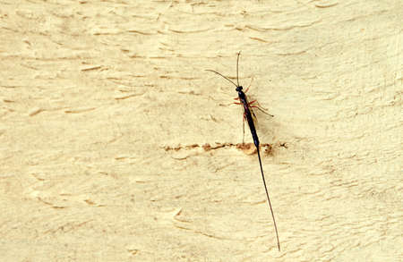 A beautiful insect on a background of the wooden surface painted in yellow color.              photo