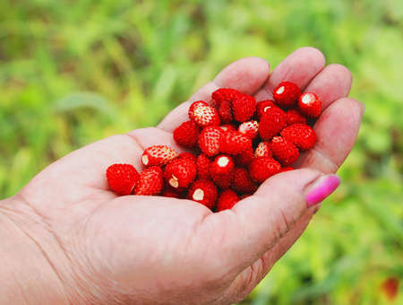 extremely: Aroma of fresh wild strawberry; in a female hand is extremely pleasant.
