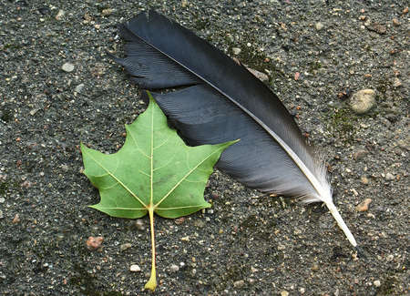 A feather of a bird and a leaf of the tree, fallen to a path - inevitable, but not tragical losses.  photo