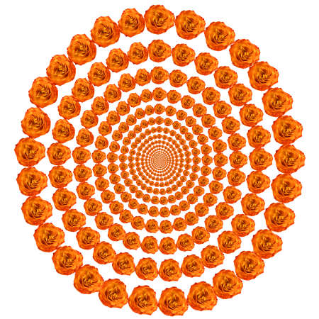 curtailed: An abstract illustration. Concentric circles from colors the roses leaving in infinity. A pure white background.