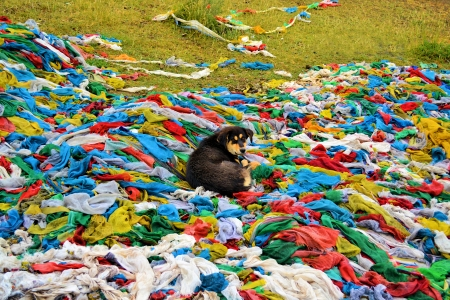 A dog lying on a heap of Tibetan prayer flags photo