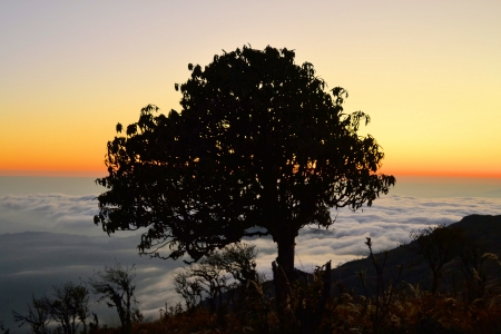 Lonely beautiful autumn tree sitting above the clouds in the himalaya mountain range in Nepal photo