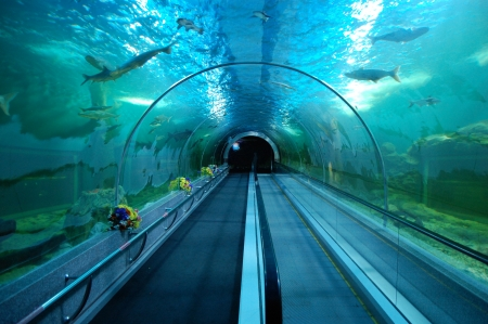 The aquarium at Bueng Boraphet features a 25-metre underwater tunnel in Central Thailand.