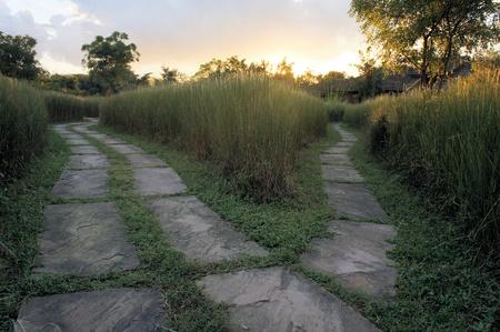 Ruta individual se divide en dos direcciones, un tenedor en la carretera en la hierba alta en la India
