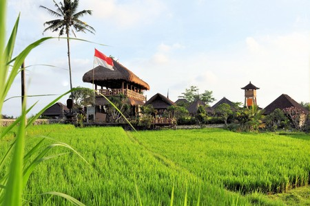 Huts flowing the Indonesian flag in green rice paddies near Ubud, Bali, Indonesia