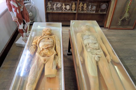 corpses: Human Bodies  Forensic Exhibit in a Forensic Medicinal Exhibition Editorial