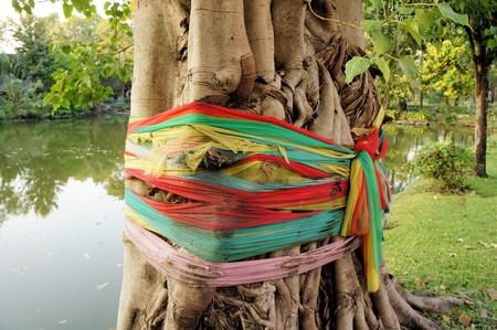 Tibetan Buddhist prayer flags are wound around a tree in Thailand