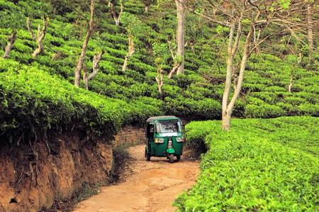 Tuk Tuk Rikshaw going through Tea field plantations in the mountain area in Nuwara Eliya, Sri Lanka
