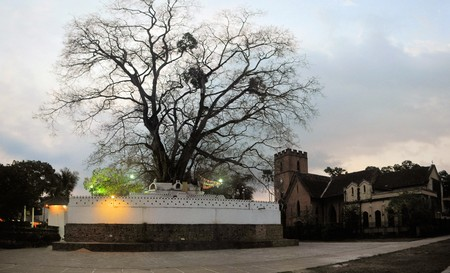 Sacred Buddhist Bodhi tree near temple of the tooth in former capital city of Kandy, Sri Lanka photo