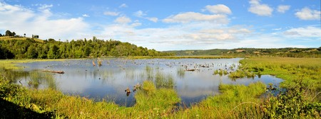 water birds: Pond with water birds in swampy marshland on the island of Chiloe, Patagonia Southern Chile Stock Photo
