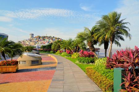Garden seaside Malecon 2000 park and pedestrian walkway with Santa Ana Hill in background, Ecuador
