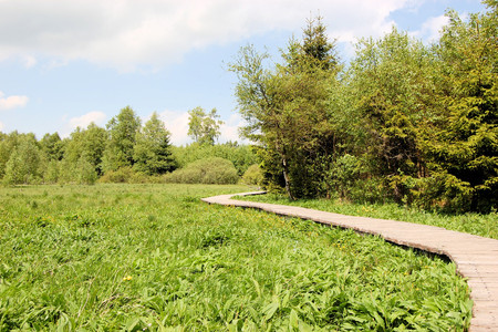 swampland: Boardwalk across swampland to protect the environment from damage, Rhoen mountain range, Germany