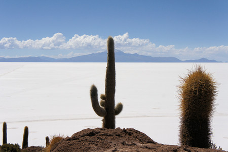 incahuasi: View of cactus covering Island Incahuasi with the Uyuni Salt Flats stretching out below in Bolivia