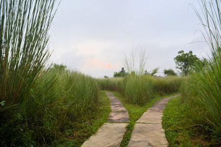 Único caminho se divide em duas direções, uma bifurcação na estrada na grama alta na Índia