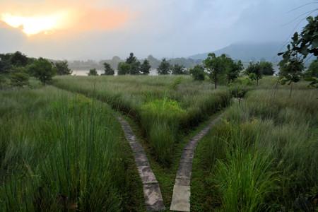 crossroad: Ruta individual se divide en dos direcciones, un tenedor en la carretera en la hierba alta en la India