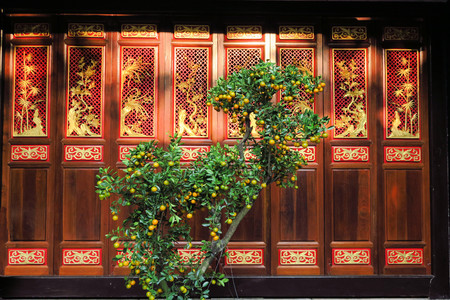 constitute: An orange tree is growing like in a zen garden in front of an old red wooden temple door of a Buddhist Pagoda in Chinatown, Ho Chi Minh, Vietnam
