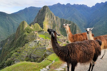 Three Llamas in front of Machu Picchu, the famous lost city of the Incas near the river Urubamba located in the region of the sacred valley of Cuzco. Machu Picchu is a UNESCO world heritage site and one of the 7 new world wonders.