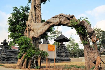 hindues: Grandes �rboles son sagrados para los hind�es de Bali en este templo en el campo de Bali
