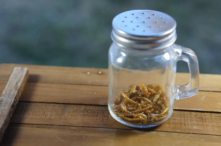 Roasted larvae in a jar at sunset 스톡 콘텐츠
