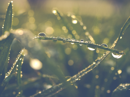 photo shows a closeup of grass with drop of water Stock Photo