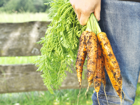 grow your own carrot