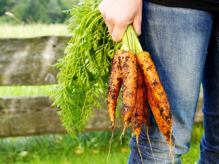 close up hands holding carrots after harvest