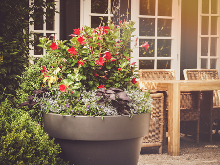 nice morning situation showing a patio or terrace with flowers in container or pot and patio furniture at the background; at the background also visible is a terrace door and windows Imagens
