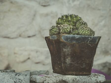 moody photo shows cactus potted in rustic rusty vintage pot in front of stone wall