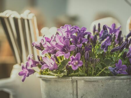 image shows a moody restaurant decoration with nice potted plant - campanula or bell flower and cutlery at the background