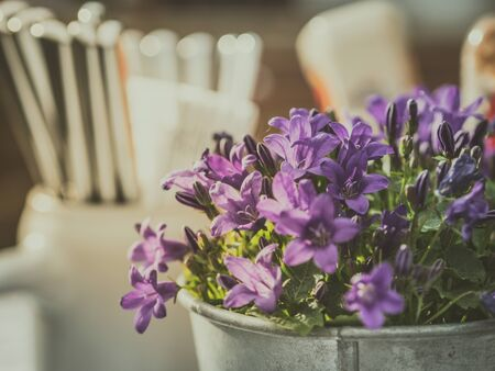 moody situation in beer garden or restaurant with nice table decoration including potted plant with blue flowers - campanula or bell flower Imagens