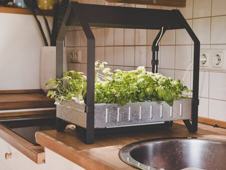 Simple hydroponics growing herbs and vegetables in the kitchen Imagens