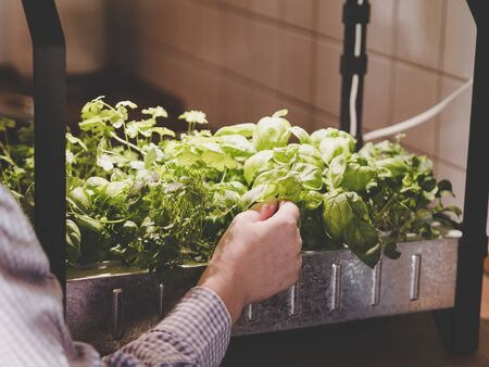 how to grow and harvest herbs and vegetables indoors using indoor grow kit or indoor growing systems like home hydroponics or a hydroponic garden