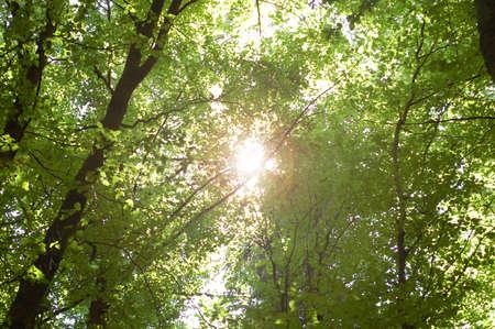 Sun shines through leaves Stock fotó