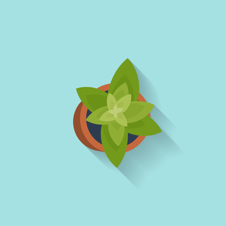 the spikes: House or office plant in a flat style. Decoration. Vector illustration