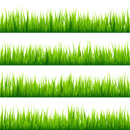 grass blades: Grass isolated on white set. Green meadow. Nature background. Spring, summer time.